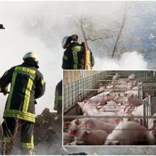Klaipėdos rajone gausios ugniagesių pajėgos gesina kiaulininkystės ūkyje kilusį gaisrą