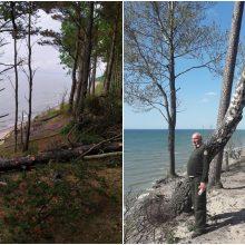 Prie Olando Kepurės skardžio pjaunami medžiai