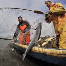 Seimo sukeltas žuvininkystės chaosas