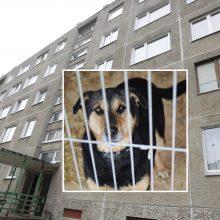 Kaimynai nebeapsikenčia sklindančio šlapimo ir išmatų tvaiko: bute – šunų veislynas?