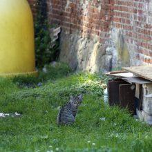 Katės pelių neišgaudys