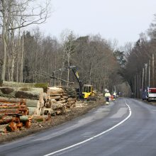 Klaipėdoje sumažės valstybinių miškų