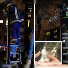 Neeilinė gelbėjimo operacija: ugniagesiams teko vaduoti medyje įstrigusį kačiuką