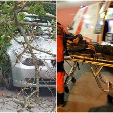 Nelaimė Varėnos rajone: ant kelio užvirto medis, sužalota BMW automobilio vairuotoja