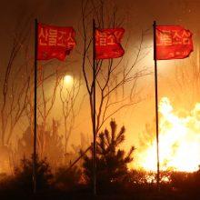 Pietų Korėjoje dėl miško gaisrų paskelbta nepaprastoji padėtis