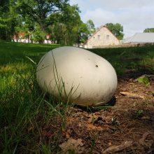 Ilzenbergo dvaras turtėja gamtos retenybėmis – išdygo milžiniški grybai