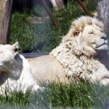 Klaipėdoje įsikūręs zoologijos sodas atvers duris lankytojams