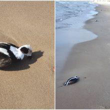 Jūros pakrantėje klaipėdiečius pasitiko nejaukus vaizdas: tiriama, kas pražudė antis