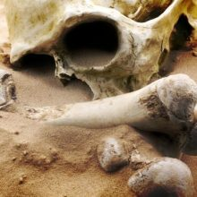 Šiurpus radinys Panevėžio rajone: miške aptikti žmogaus kaulai