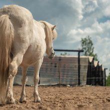 Išgąstis: po gaisro arkliai dar ilgai nesuprato, kodėl negali patekti į savo namus.