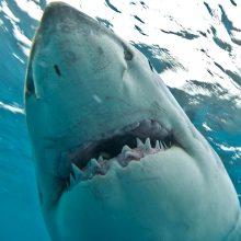 Polinezijoje turistę prancūzę sunkiai sužalojo ryklys: moteris neteko abiejų plaštakų