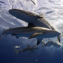 Tragedija Bahamose: rykliai mirtinai sudraskė jauną amerikietę