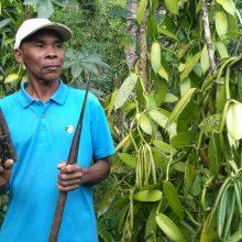 Vanilė – prieskonių karalienė, diktuojanti gyvenimą Madagaskare
