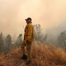 Kalifornijoje po praėjusių metų miškų gaisrų tebesmilksta vienas mamutmedis