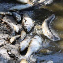 Sibire užfiksuotas masinis kirų ir žuvų gaišimas