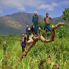 Etiopijoje – rekordas: per dieną pasodinta 200 mln. medžių