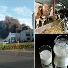 Žemės ūkio ministras: užterštas pienas iš Alytaus vežamas deginti