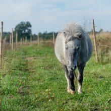 """Gyvenimo ir žmonių nuskriausti arkliai ramybę randa """"Arklių slėnyje"""""""