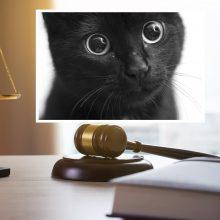 Surištomis galinėmis kojomis į pusnį katiną išmetusiam vyrui teismas skyrė 300 eurų baudą