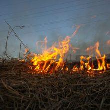 Per parą Lietuvoje kilo dešimtys žolės gaisrų: išdegė beveik 18 hektarų pievų