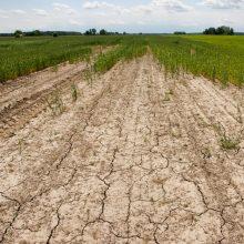 NMA: ūkininkus, patyrusius nuostolių dėl sausros, pasieks pirmosios išmokos