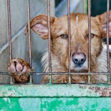 VMVT: pasirašyta bendradarbiavimo sutartis su Gyvūnų apsaugos ir gerovės asociacija