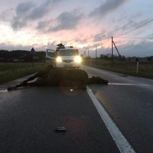 Vairuotojų fiasko keliuose: vienas kliudė jautį, kitas – partrenkė arklį