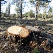 Nuo kirtimų pasaulio miškus saugo juos perkantys savanoriai
