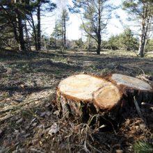 R. Lapinskas: ne biokuras lemia miškų kirtimo apimtis