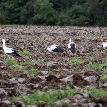Ministerija: per 20 metų Lietuvoje tam tikrų paukščių rūšių sumažėjo perpus