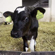 Pieno gaminių rinkoje pastebimi atsigavimo ženklai