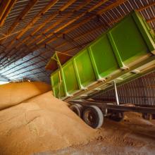 Pokyčiai: nuo šiol lietuviški kviečiai bus eksportuojami į Braziliją