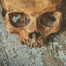 Joniškio rajone, kartoninėje dėžėje, rasta žmogaus kaukolės dalis