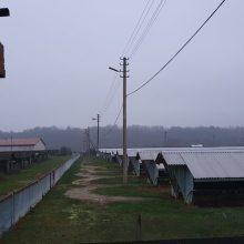 COVID-19 įsisuko į Jonavos rajono ūkį: audinės užsikrėtė nuo sergančio darbuotojo?