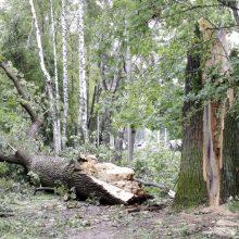 Nuo stipraus vėjo medžiai virto ant laidų, automobilių ir namų