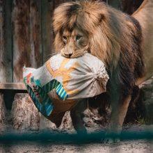 Netikėta: moteris po mirties Lietuvos zoologijos sodui paliko 30 tūkst. eurų