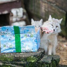 Zoologijos sode gyvūnai jau išsipakavo kalėdines dovanas