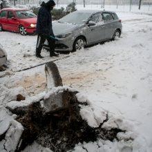 Ugniagesiai kliūtis šalina be atokvėpio: medį teko nukelti nuo automobilio