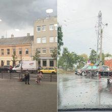 Dėl masinių kaktomušų Kauno gatvėse kalta miestą skalavusi liūtis?