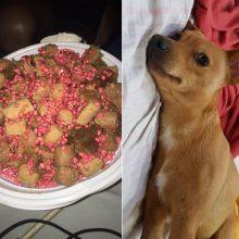 """Įžūli šunų nuodytojų taktika: """"skanūs"""" spąstai tyko prie pat namų"""