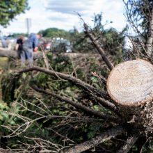 Kelininkai perspėja: dėl gūsingo vėjo ant kelių gali būti nukritusių medžių