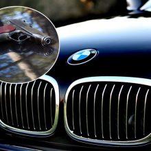 Konfliktas alytiškio kieme: su BMW atvažiavę vyrai jį sužalojo ginklo rankena