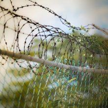 Iki gyvos galvos nuteistas žmogžudys V. Raila į laisvę išeis anksčiau