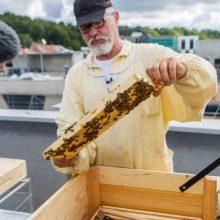 Išsuktas pirmasis Kauno miesto bičių medus: nustebino kokybė