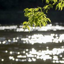 Širdį verianti paieškų atomazga: Anykščių rajono ežere rastas nuskendęs vyras