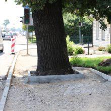 Garliavos dilema: kas svarbiau – ąžuolas, žmonės ar kvadratinis metras žemės?