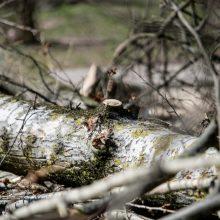 Lazdijų rajono gyventoja savo sklype pasigedo beveik 80 medžių