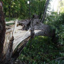 Ugniagesiai aštuonis kartus vyko šalinti vėjo nuverstų medžių