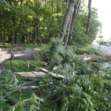 Gūsingas vėjas vertė medžius: apgadinti automobiliai