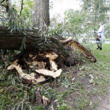 Gūsingas vėjas vertė medžius: labiausiai kliuvo Vilniui